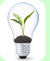Sustainable Lightbulb with Green Plant